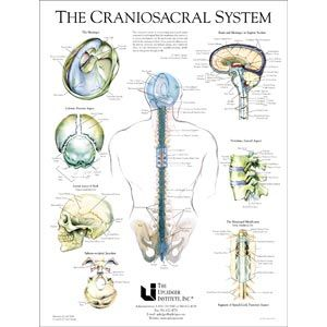 Craniosacral System Poster 19