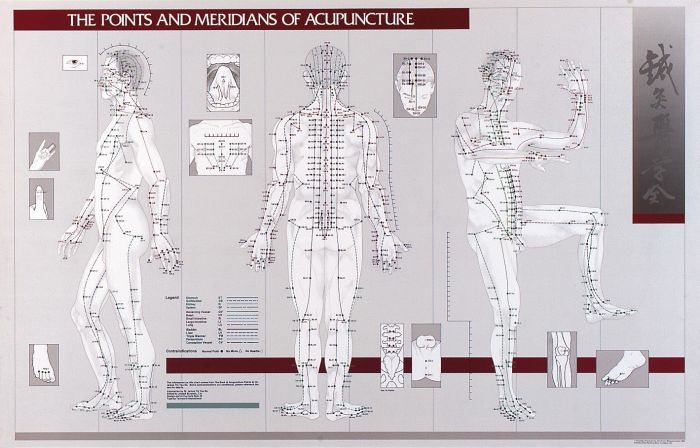 Points & Meridians Of Acupuncture Chart 23